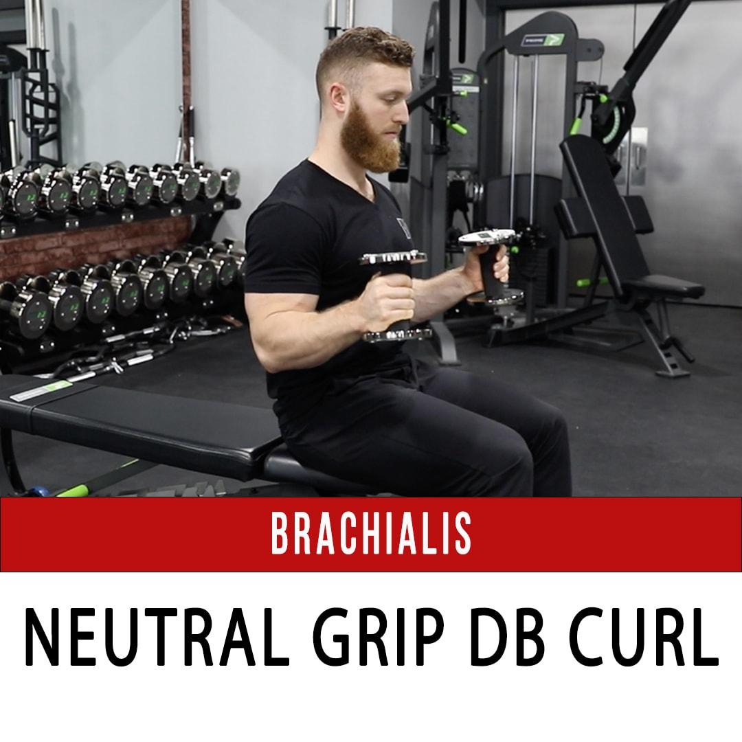 Brachialis Neutral Grip DB Curl