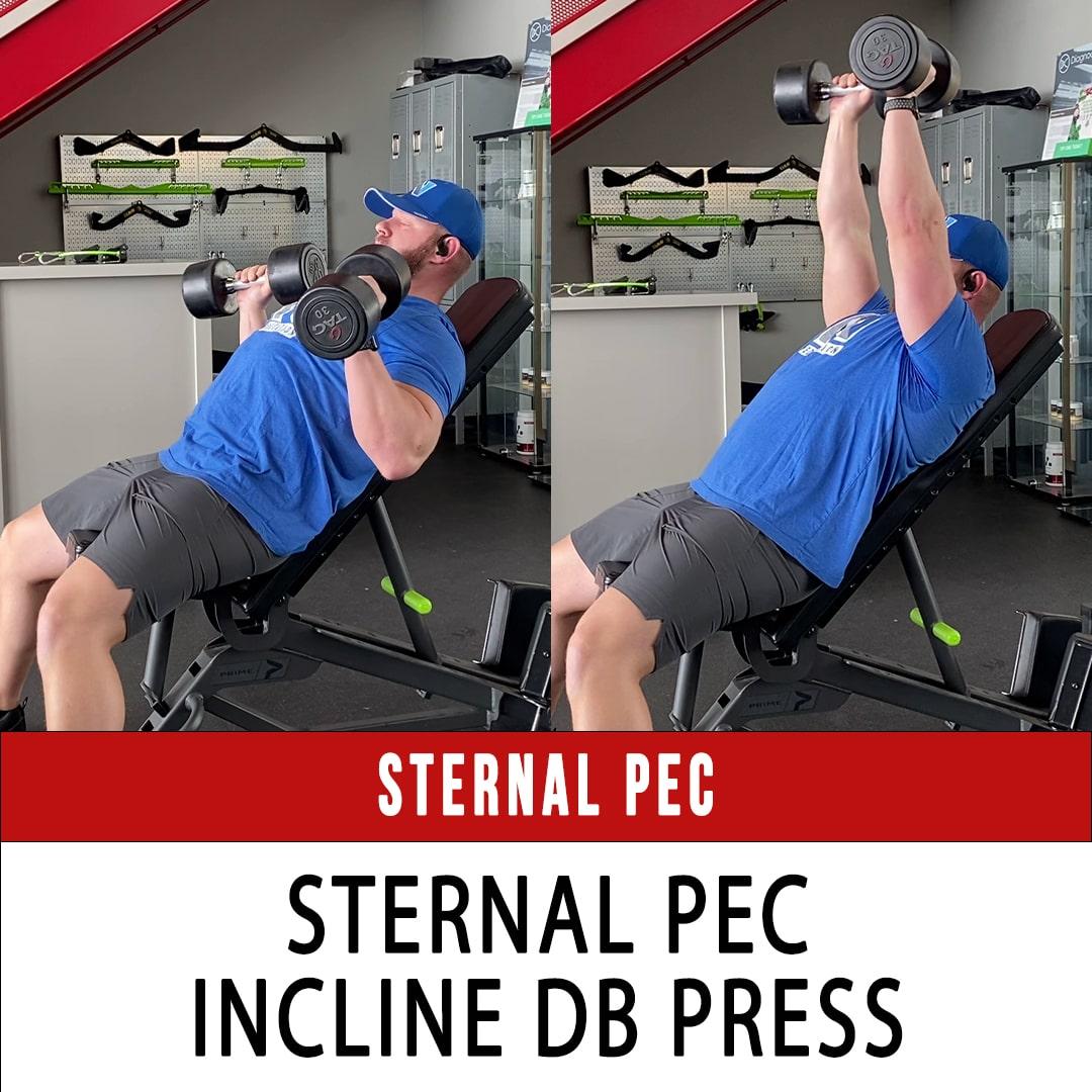 Sternal Pec Incline DB Press