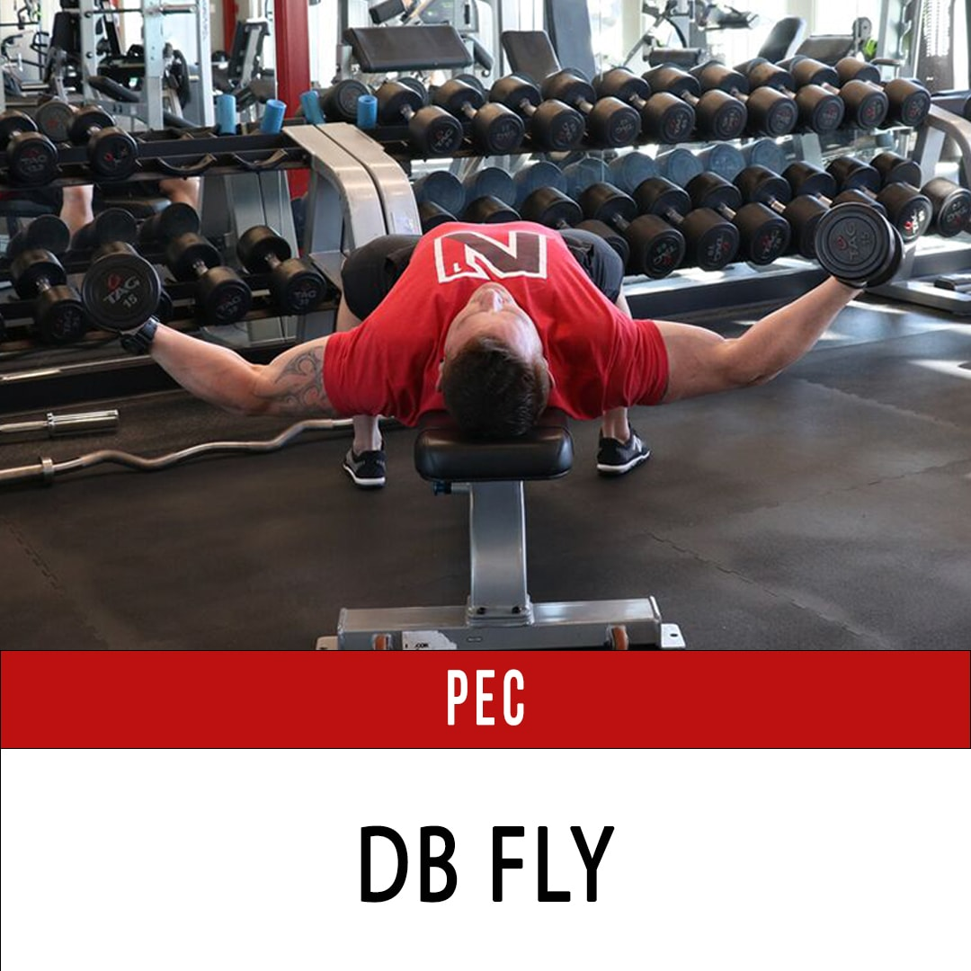 Chest DB Fly