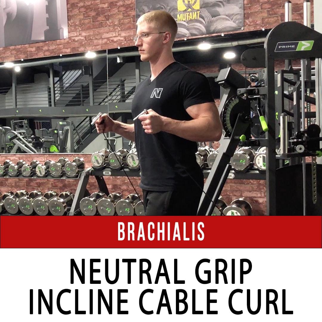 Brachialis Neutral Grip Incline Cable Curl
