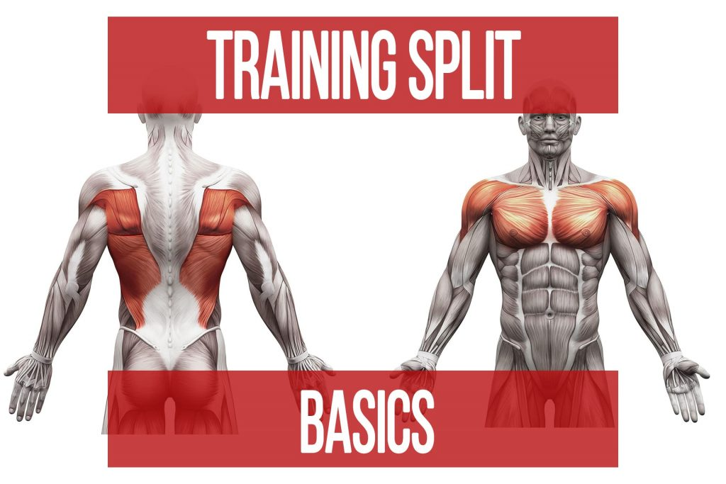 Training Split Basics