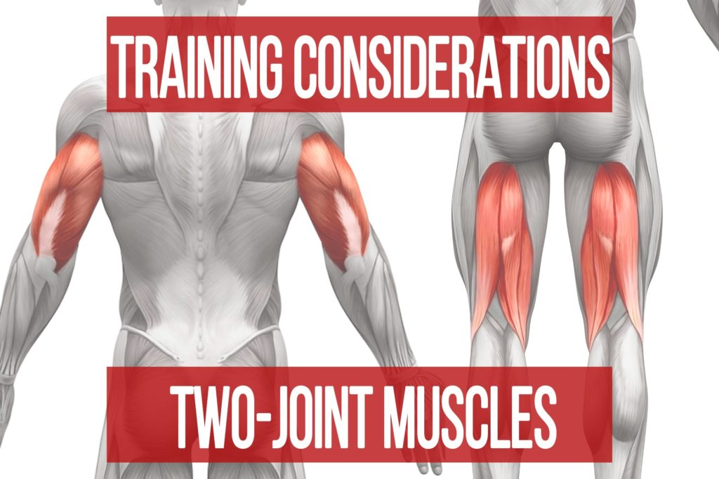 Training Considerations for Two-Joint Muscles