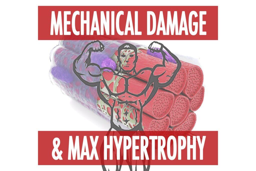 Mechanical Damage & Hypertrophy